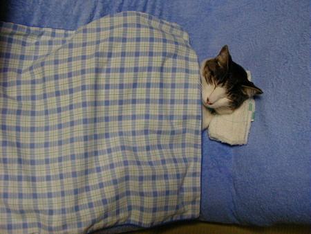 食事をした後の眠気!これ「ある習慣」をやめる事で解放されるようです。結構コレ助かります!